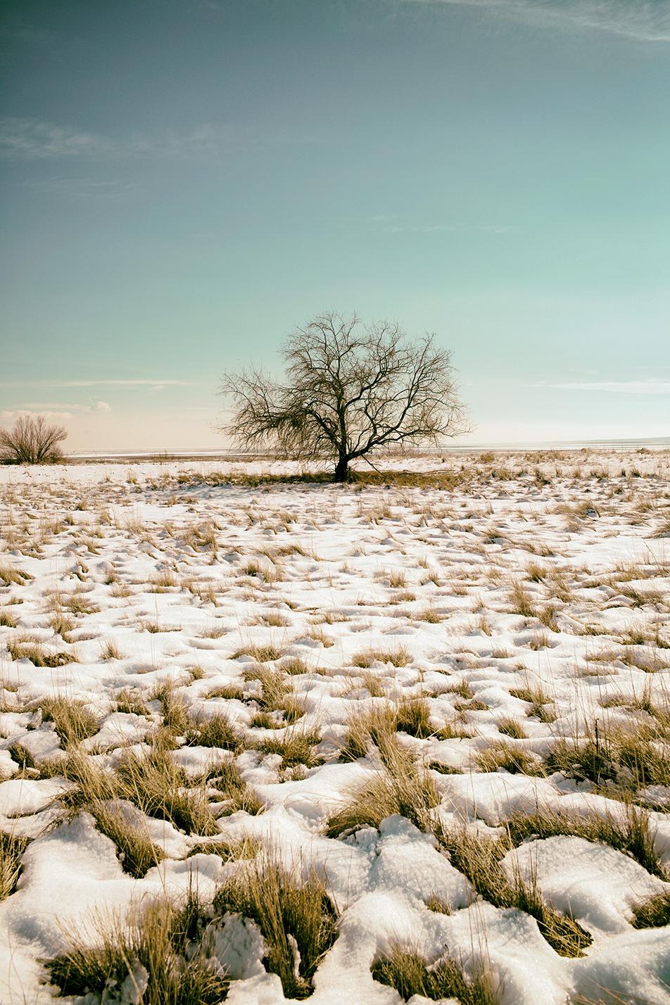 alone-tree_24378370653_o